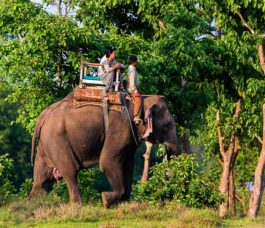Jungle Safari in Chitwan National Park